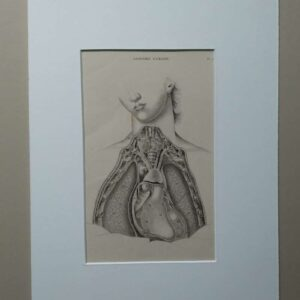 Anatomie humaine plate 7 , The chest