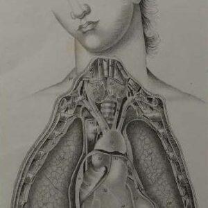 Anatomie humaine plaat 7 de borstkast