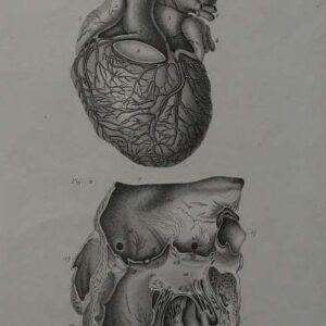 Anatomie humaine plaat 8, het hart