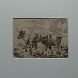 engraving of a cow and a bull by Marcus de Bye after Paulus Potter