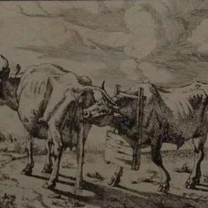 Gravure van een koe en een stier